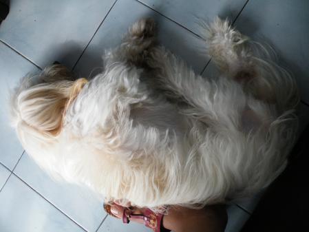 パナマ_犬