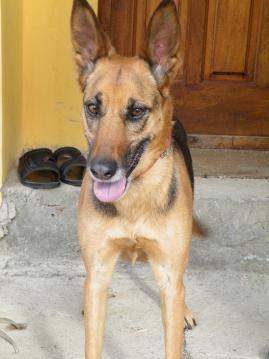 アルゼンチン_犬②