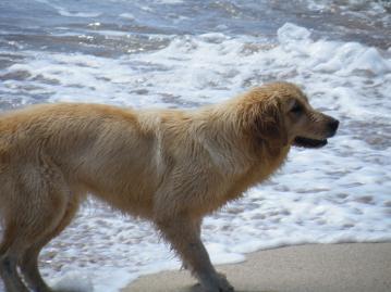 チリ_犬②