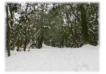 2.5 雪の路