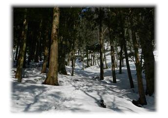 4.8 針葉樹林帯