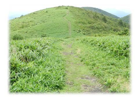 7.31 道後山山頂より岩樋山方面