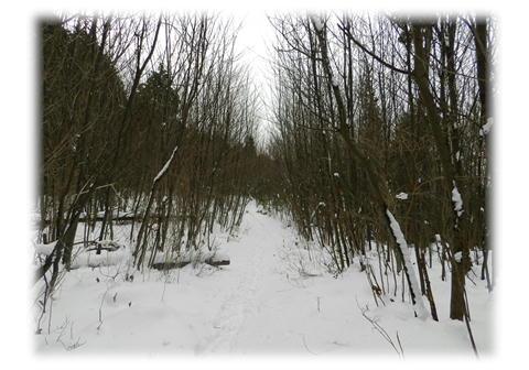 1.9 落葉樹林帯