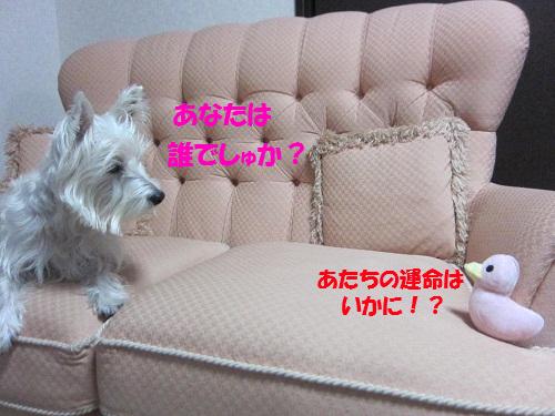 111213009.jpg