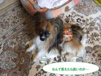 25-11_20110825161052.jpg