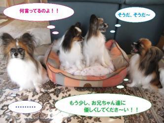 31-03_20110831200233.jpg