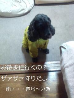 DSC_0112_convert_20120318120316.jpg