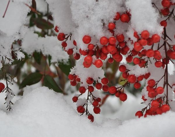 14雪DSC_0131