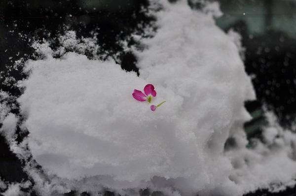 14雪DSC_0295
