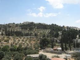 oliveyama.jpg