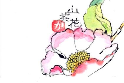 山茶花1204