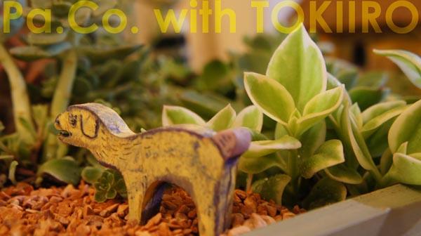 paco_with_tokiiro006.jpg