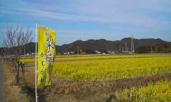 菜な畑ロード・01