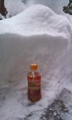 降雪・2.29