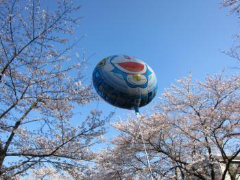 ドラえもんと桜
