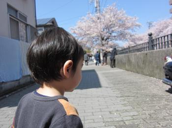 実家桜祭り