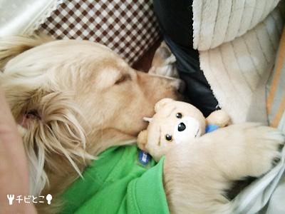テッドとおひるね。。