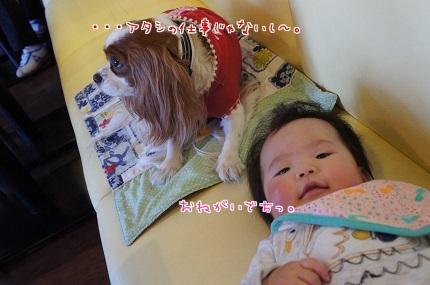 嵐丸 2013.11.24-4