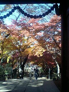 本土寺を望む