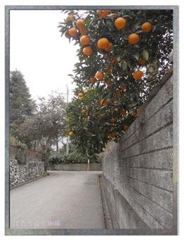 橙の実る道