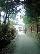 野宮神社への竹林道