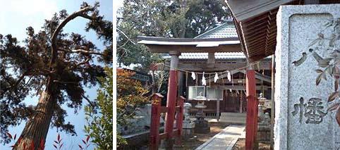 八幡神社と大木