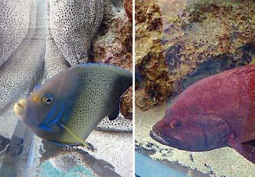 美ら海の魚たち