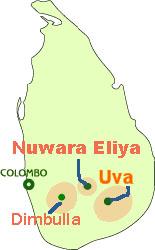 スリランカハイグロウンティ産地