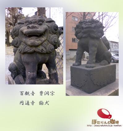 円通寺の狛犬