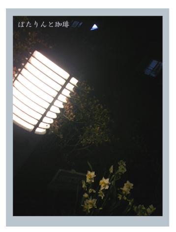 ライトと水仙