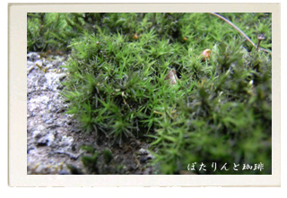 長福山 廣壽寺の苔