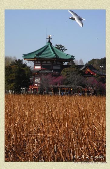 上野弁財天を臨む