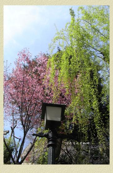 富士神社の柳と桜