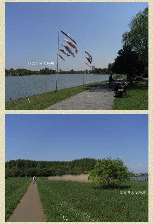 広いです!水元公園