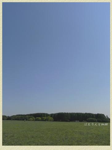 水元公園の大草原