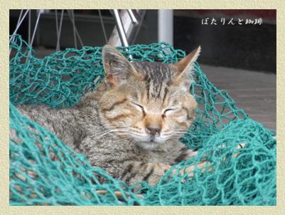 網にかかったネコ