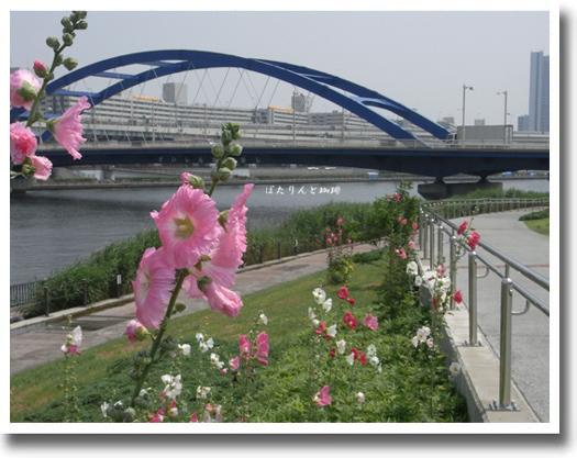 水神大橋とタチアオイ
