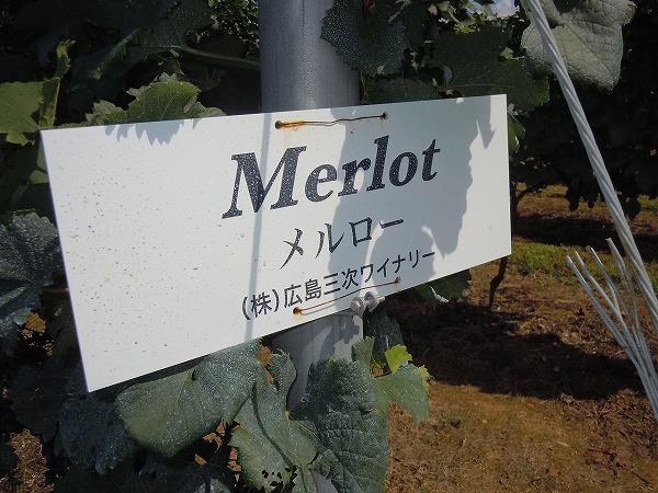 看板メルロー