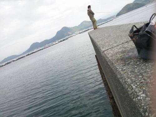 ブログ写真で沼津市平沢の狭い幅の防波堤の先でルアー釣りする釣り人をシャメしたが彼はきっとイカを狙っていたと思う