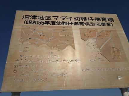 磯釣り現場の静岡県沼津地区マダイ幼稚仔保育場の看板を写真撮影