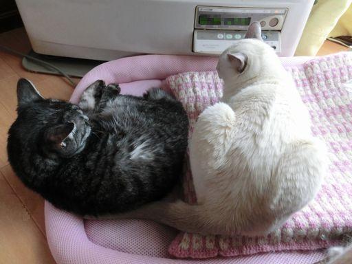 fluffy&miu 33