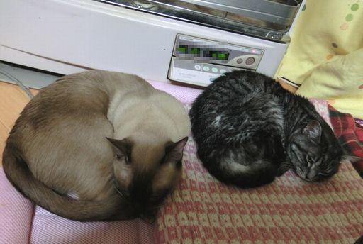 fluffy&hikaru 28
