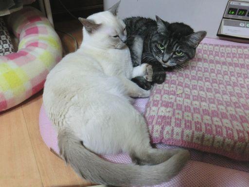 fluffy&miu 34