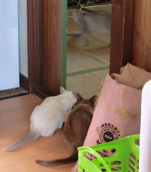 hikaru&miu&rayleigh 1