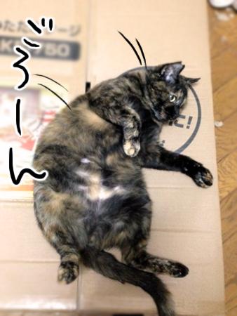 サビエル2013.11.25①