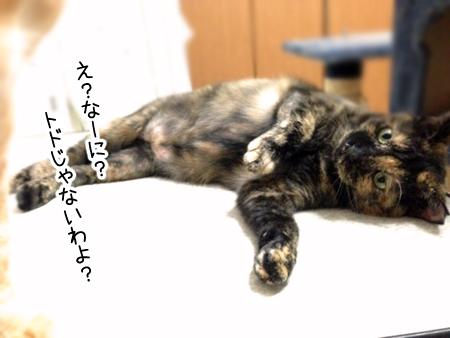 サビエル2013.11.25②