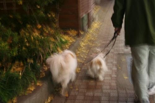 お散歩 12/09