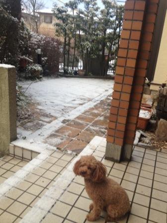 yukinomimi.jpg