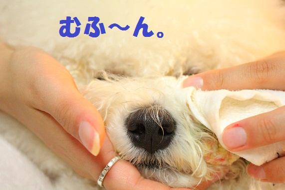 12_20120222020129.jpg