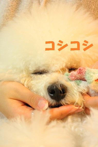 19_20120222020716.jpg
